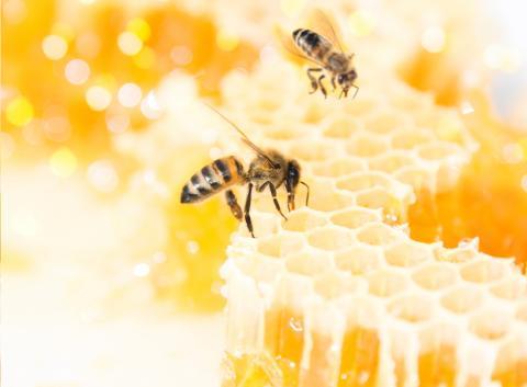 Bee Thumb